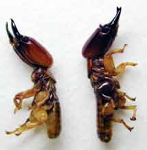 أنواع النمل الأبيض large 1173778917